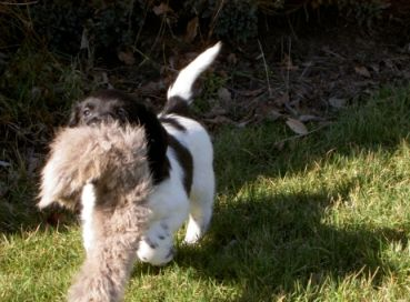 puptest_konijnenvel