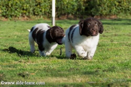 L-Nest Alde Leane pups-118500