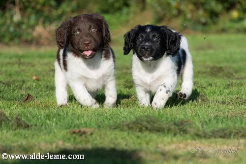 L-Nest Alde Leane pups-47500