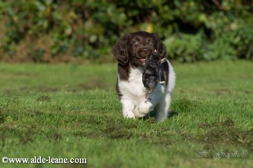 L-Nest Alde Leane pups-69500