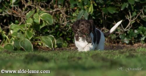L-Nest Alde Leane pups-96500