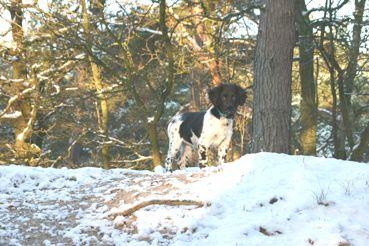 IMG_0300-Peer-in-de-sneeuw-