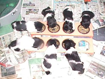 puppies_eten_flits
