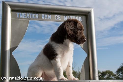 L-Nest Alde Leane pups-174500
