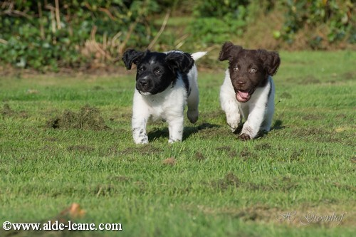 L-Nest Alde Leane pups-37500