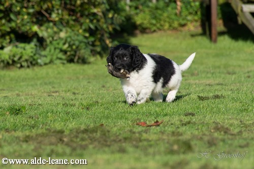 L-Nest Alde Leane pups-57500