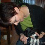 pups van Sietske 036stabyhounpups